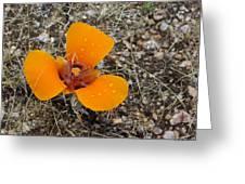 Mojave Orange Greeting Card