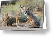Mojave Secret Greeting Card