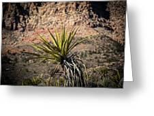 Mojave Yucca Greeting Card