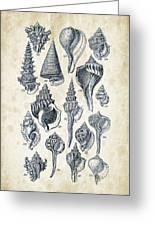 Mollusks - 1842 - 17 Greeting Card