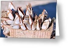 Mollusks On Wood Plank Greeting Card