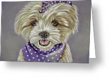 Molly The Maltese Greeting Card