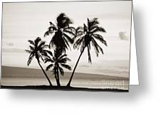 Molokai Palms Greeting Card