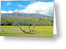 Molokai Surrealism Greeting Card