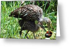 Mom And Baby Limpkin Greeting Card