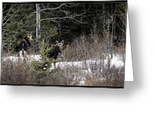 Mom And Calf  In The Forest Greeting Card