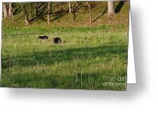 Mom And Cub Greeting Card
