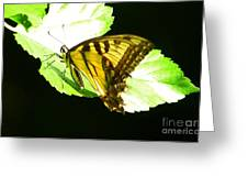 Moment Of Life Greeting Card