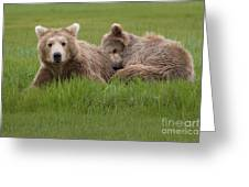 Momma And Cub Greeting Card