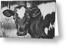 Momma Cow Greeting Card