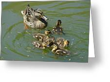 Momma Duck With Babies Greeting Card