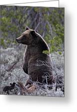 Momma Grizzly And Cubs Greeting Card