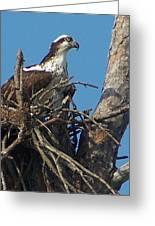 Momma Osprey Greeting Card
