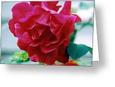 Mom's Red Rose Greeting Card