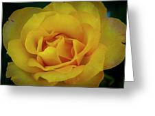 Moms Yellow Rose Greeting Card