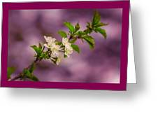 Mon Cherry Greeting Card