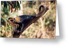 Mona Monkey In A Tree Greeting Card