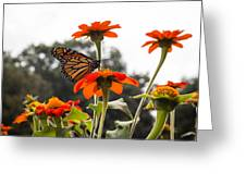 Monacrch Butterfly On A Flower Greeting Card