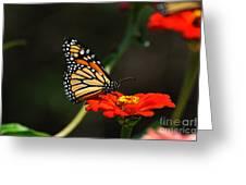 Monarch 6 Greeting Card