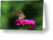 Monarch 7 Greeting Card