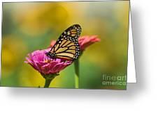 Monarch 9 Greeting Card