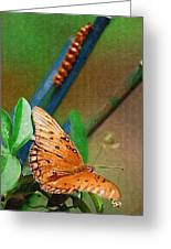 Monarch And Caterpillar Greeting Card