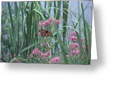Monarch And Pink Greeting Card