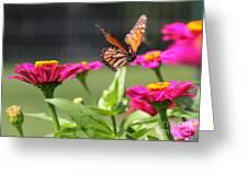 Monarch Approaching Zinnia Greeting Card