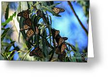 Monarch Blues Greeting Card