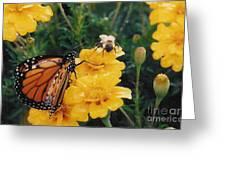 #002 Monarch Bumble Bee Sharing Greeting Card
