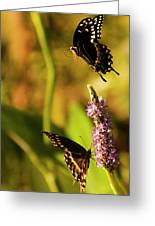 Monarch Butterflies In Spring At Wakulla Springs Greeting Card