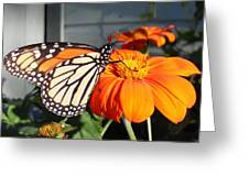 Monarch Butterfly 2 Greeting Card