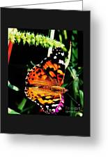 Monarch Butterfly # 2 Greeting Card