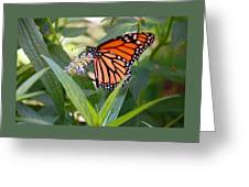 Monarch Butterfly 3 Greeting Card
