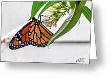 Monarch Butterfly In The Garden 3 Greeting Card