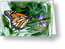 Monarch Butterfly 4 Greeting Card