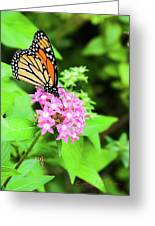 Monarch Butterfly And Honey Bee Greeting Card