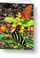 Monarch Butterfly And Zebra Butterfly Greeting Card