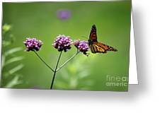 Monarch Butterfly Balanced 2017 Greeting Card