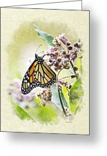 Monarch Butterfly Blank Note Card Greeting Card