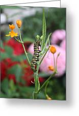 Monarch Butterfly Caterpillar Greeting Card