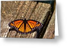 Monarch Butterfly II Greeting Card
