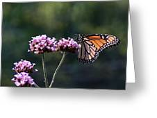 Monarch Butterfly IIi Greeting Card