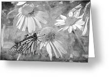 Monarch Butterfly In Black And White Greeting Card