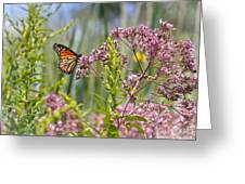 Monarch Butterfly In Joe Pye Weed Greeting Card
