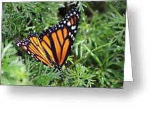 Monarch Butterfly In Lush Leaves Greeting Card
