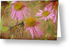 Monarch Butterfly In Pink Greeting Card