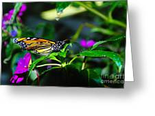 Monarch Buttefly Greeting Card