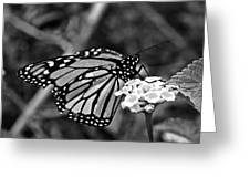 Monarch Butterfly. Greeting Card