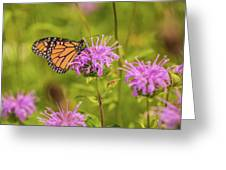 Monarch Butterfly On Bee Balm Flower Greeting Card